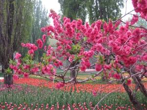 Beijing Botanischer Garten